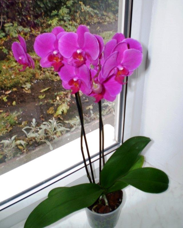 Орхидеи в горшках уход в домашних условиях пошагово