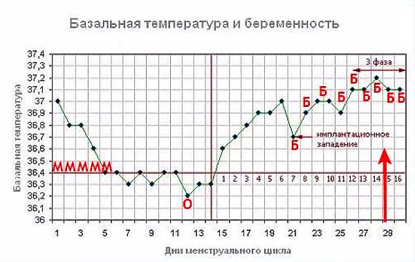 Базальная температура измеренная днем при беременности