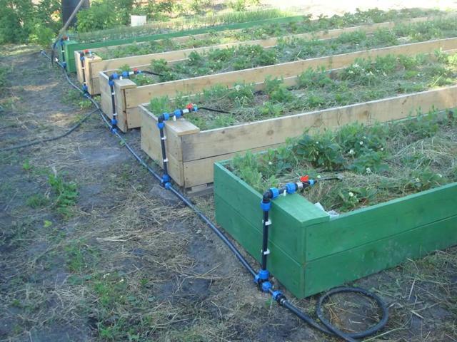Система полива на огороде своими руками фото