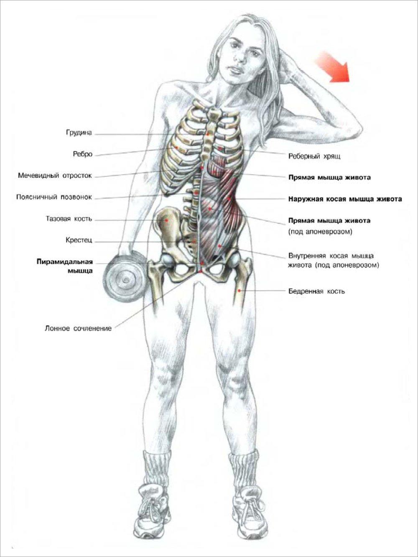 Как забить мышцы в домашних условиях