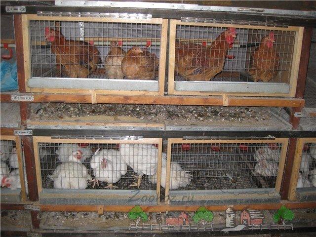 Сделать клетку для цыплят бройлеров своими руками 32