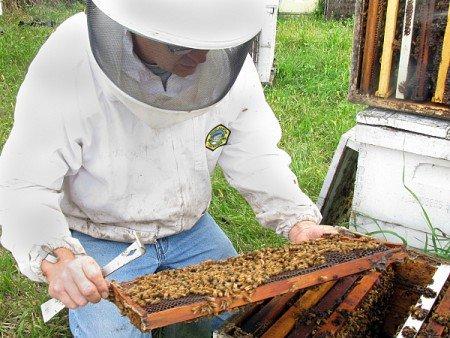 З чого почати розведення бджіл  початківцям 1ce4c5ba1d62d