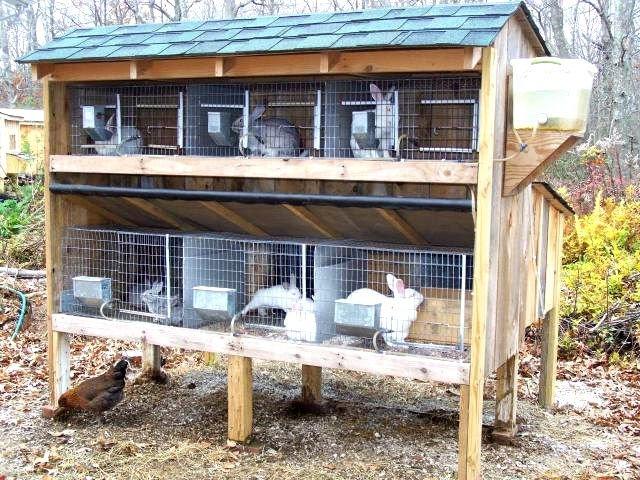 Как построить сарай для животных своими руками