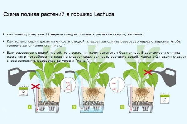Орхидеи в кашпо с автополивом выращивание 41
