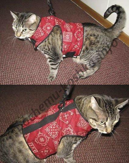 Как сделать шлейку для кошки своими руками в домашних 344