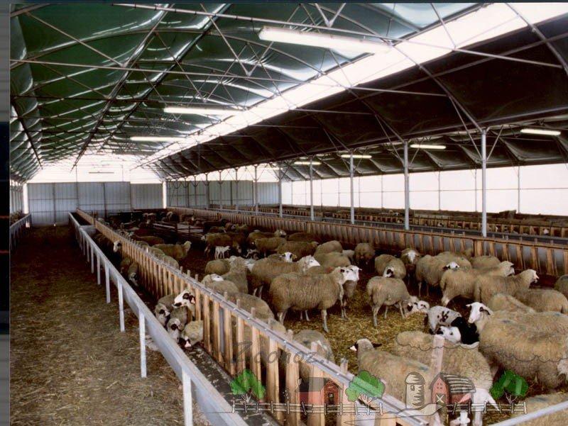 Выращивание овец в загоне 77