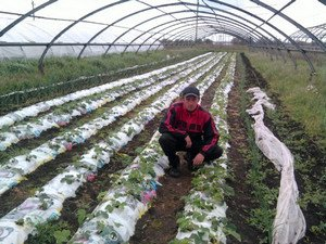 Виктория технология выращивания 32