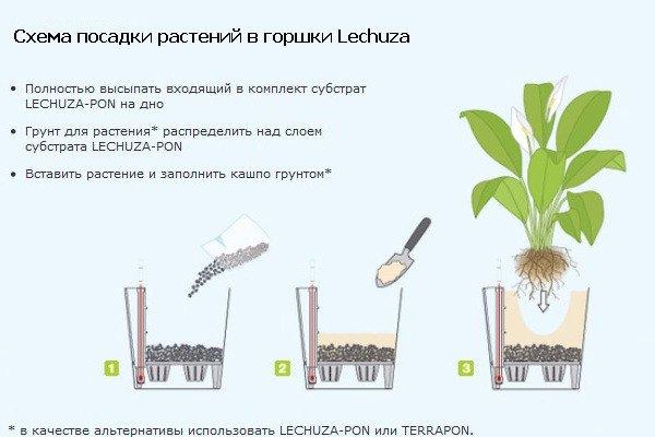 Как сажать комнатные цветы в горшок 193
