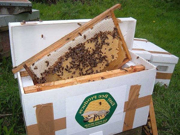 Как в августе сделать отводок пчел