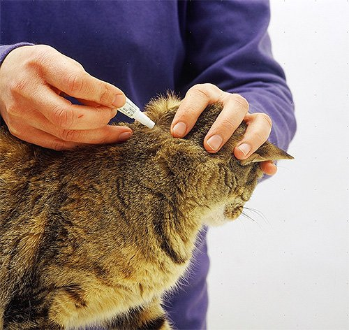 Как избавиться от шерсти, не заматывая кота в скотч? Ваши маст 64