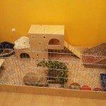Вольеры для кроликов дома своими руками 67