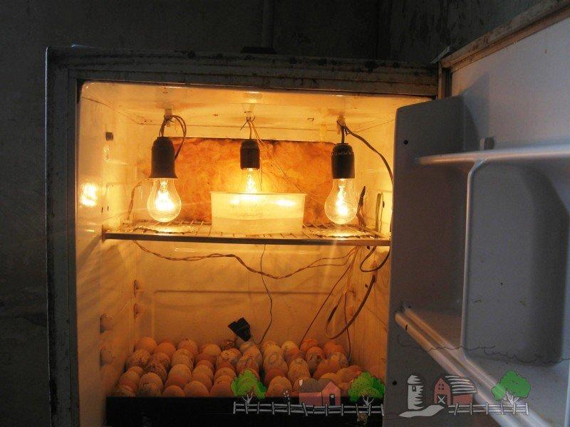 Как сделать инкубатор в домашних условиях из подручных средств