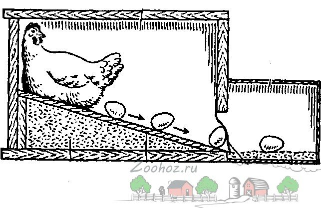 Хитрые гнезда для кур своими руками 90