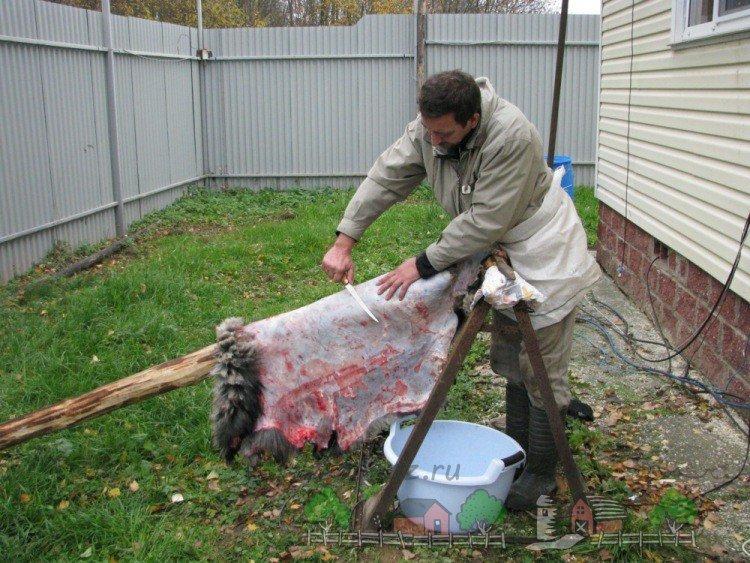 Как в домашних условиях обрабатывать шкуры баранов