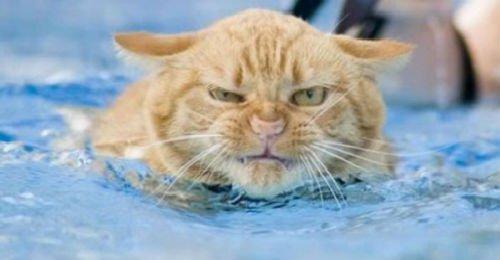 коти у снi сонник