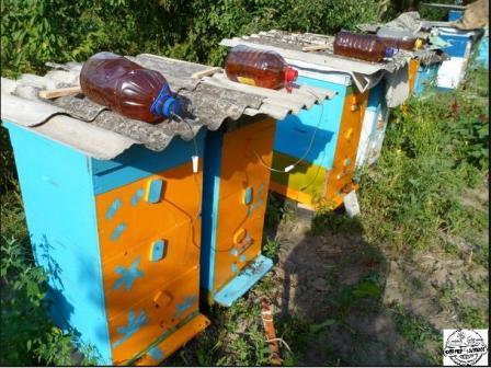Кормушки для бджіл фото 537-410