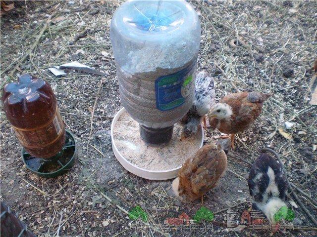 Как сделать кормушки для цыплят своими руками видео