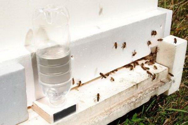 Как сделать поилку для пчел