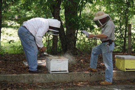 Бджільництво для початківців  з чого почати 46b746401e548