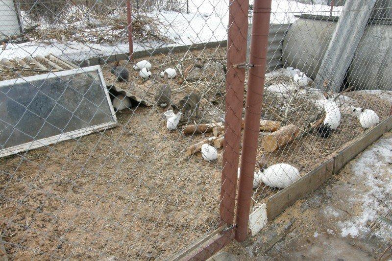 Выращивание кроликов в вольерах 12