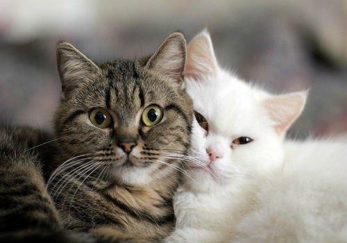 Сонник Що Означає Кіт