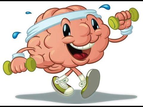 d45a630b48c57c80d795e33fb65e9bc0 Будова головного мозку і його функції