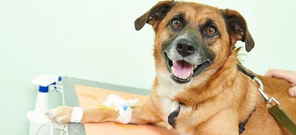 Гипогликемия у щенков