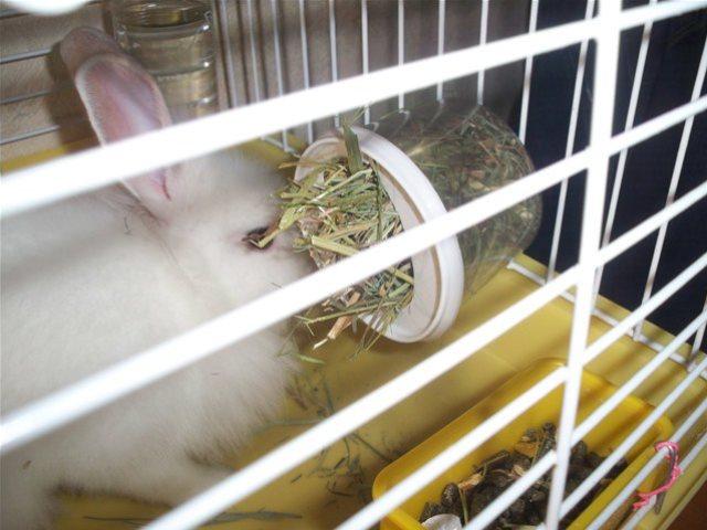 Сенник для кроликов своими руками