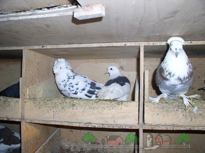 Как сделать в голубятни гнезда