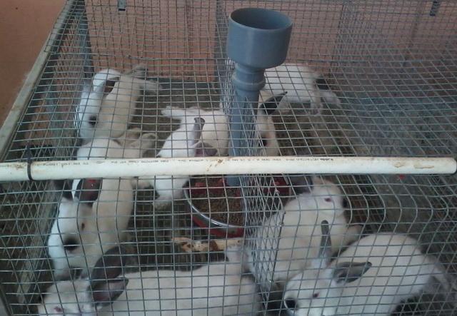 Клетка для молодняка кроликов своими руками