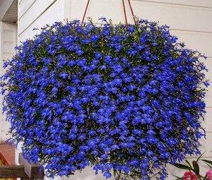 квіти літа фото
