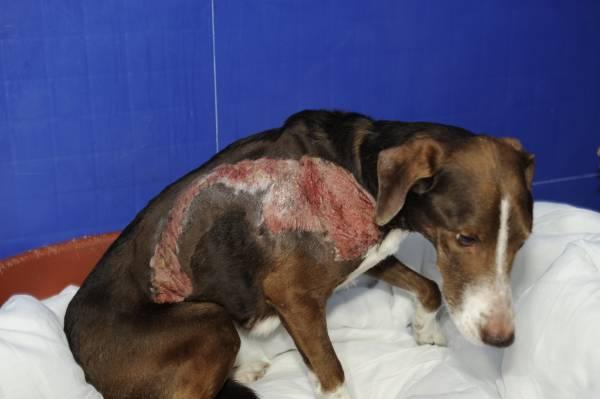 его тромбоз после перелома у собак Артикул: