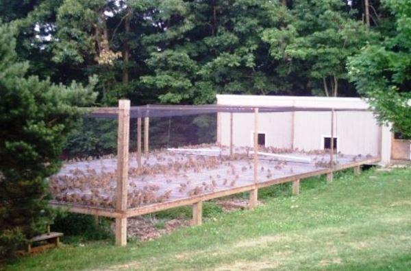 Выращивание кроликов в вольерах 60