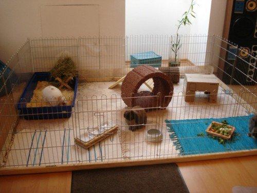 Домик для декоративного кролика для квартиры