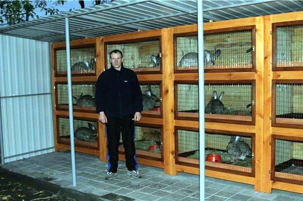 Строительство клеток для кроликов своими руками