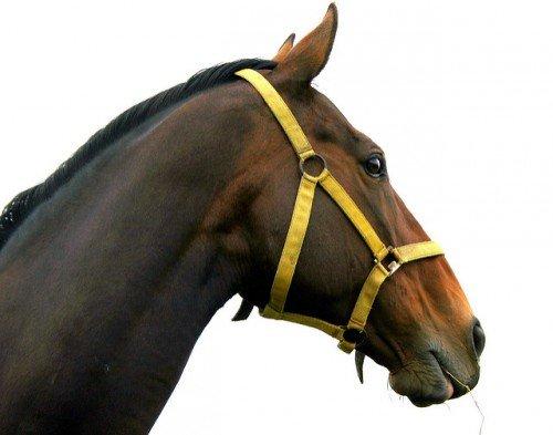 Как сшить недоуздок своими руками для лошади