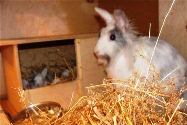 Почему кроликов самцов нельзя держать в одной клетке