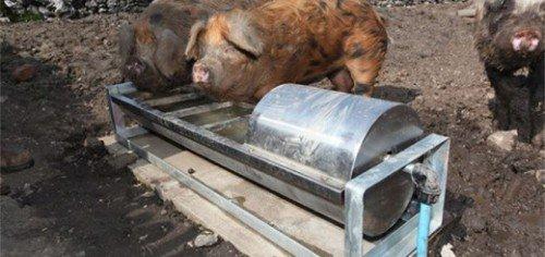 Кормушка для свиней своими руками с фото 726