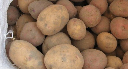 для приготовления семена картофеля устойчивыйк жукам Вячеслав Васильевич, Зеленодольск