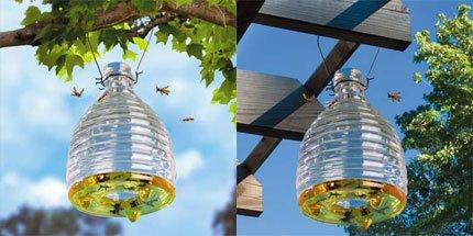 Как сделать чтобы осы не ели виноград 851