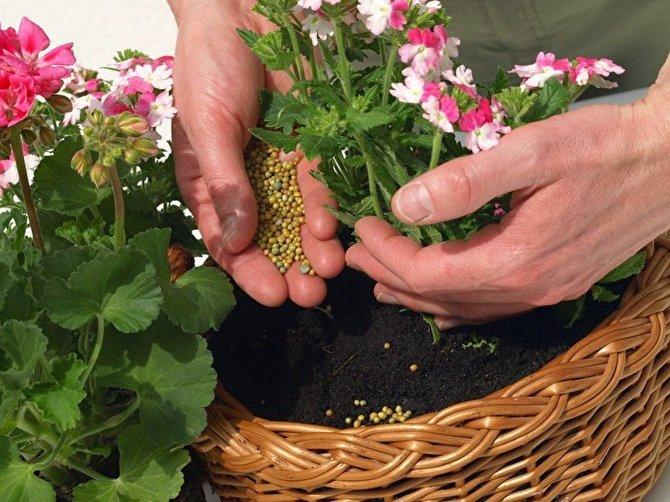 Подкормка для домашних растений в домашних условиях