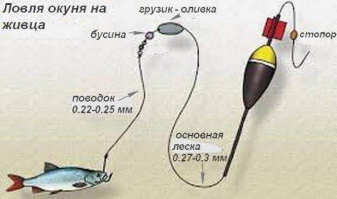 Как поймать щуку на живца в шегарке томской области