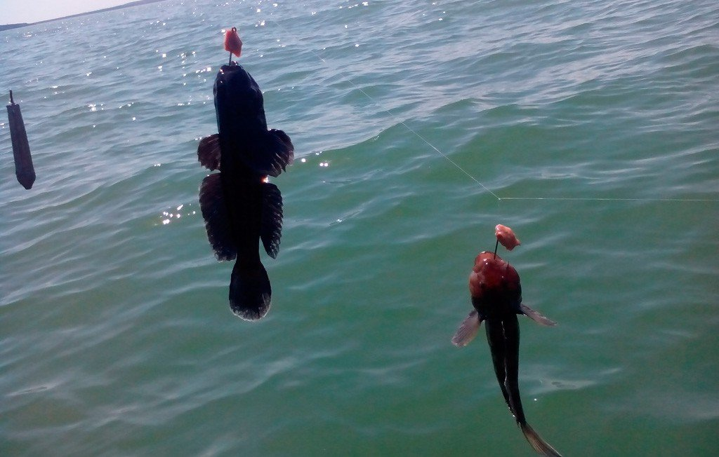 Рыбалка на азовское побережье