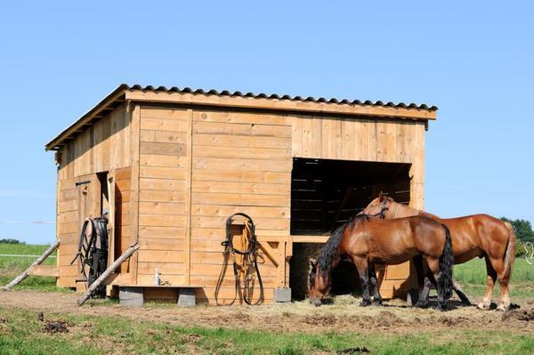Денники для лошадей своими руками 392