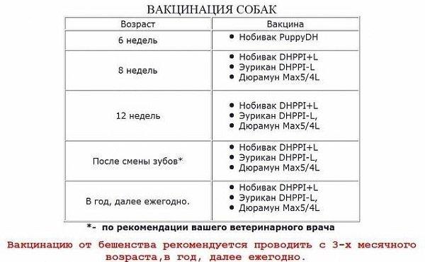 Схема прививок для щенков йорка