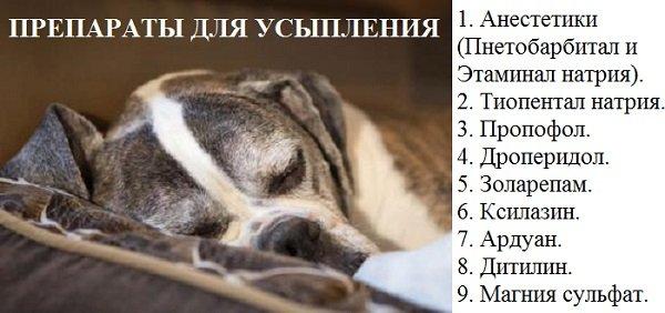 Как самому усыпить собаку в домашних безболезненно