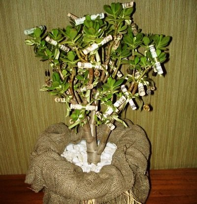 Денежное дерево подарок своими руками на 143