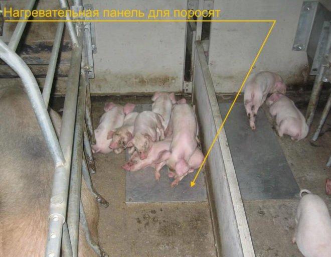 Свинарник на 4 головы своими руками 84