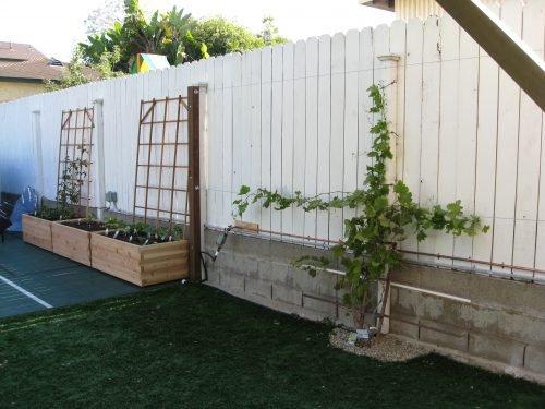 Изгородь для винограда своими руками 28