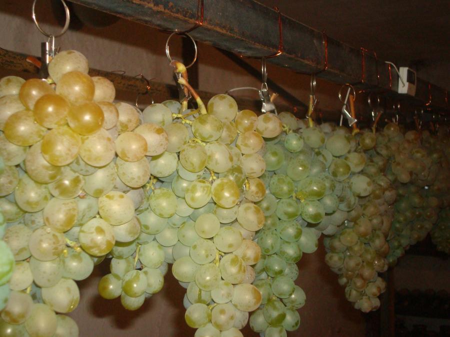 Столовый виноград чем обрабатывать кисти винограда для длительного хранения